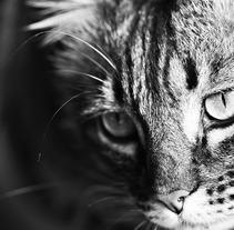 Mirando.. Um projeto de Fotografia de Almudena Conesa  - 26-10-2012