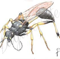 Insectos y patrimonio. Um projeto de Ilustração de Jordán Esteso Martínez - 19-02-2013