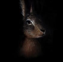 animalario. Um projeto de Ilustração de neus lozano         - 07.04.2014
