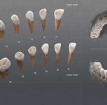 3D Visualizacion de dientes - Ilustración high poly. Um projeto de 3D, Educação e Artes plásticas de Alfonso Montón         - 27.05.2015
