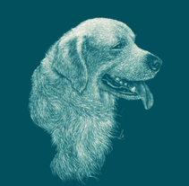 Illustration golden retriever. A Illustration project by Luis Montes         - 07.07.2016