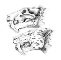 Il.lustració científica. Un proyecto de 3D y Bellas Artes de Marta Palmero Gimenez         - 13.01.2017